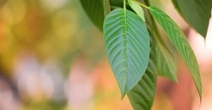 (Effects) How To Prevent Kratom Nausea